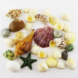 پکیج صدف و گوش ماهی