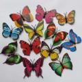 پروانه طلقی بدون مگنت