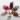 عروسک خرگوش در 6رنگ